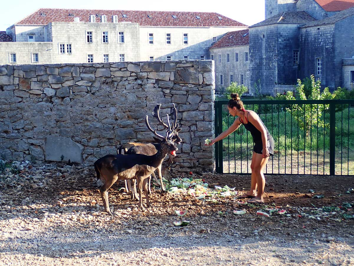 young woman feeding deers