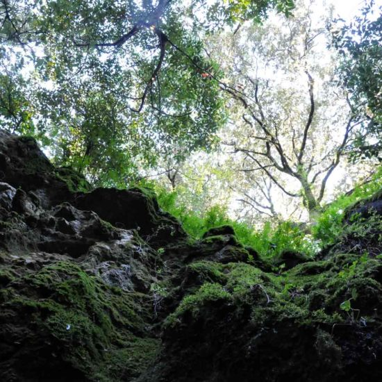 moss onkocje forest boulders in the